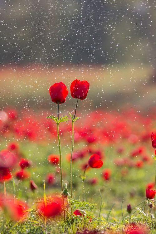 心里有阳光,雨天也是一种浪漫。人的一生,总是难免有浮沉