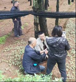 昆明健格中药材种植有限公司嵩明分公司林下中药材栽培技术示范项目通
