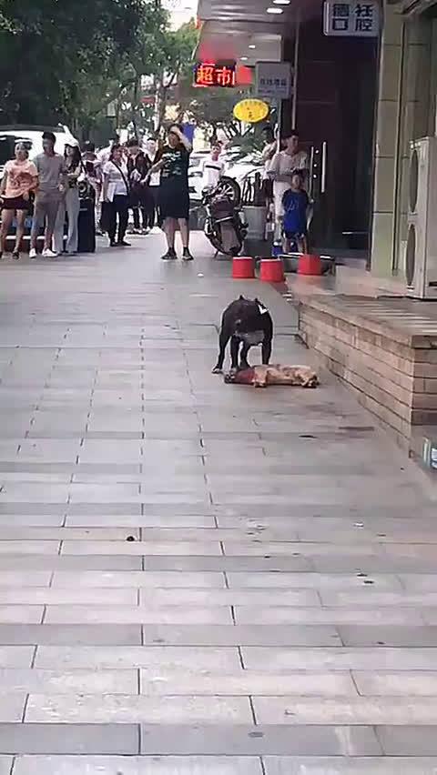 网友爆料:上江北转盘附近的街头,一只比特犬正在撕咬一只宠物狗