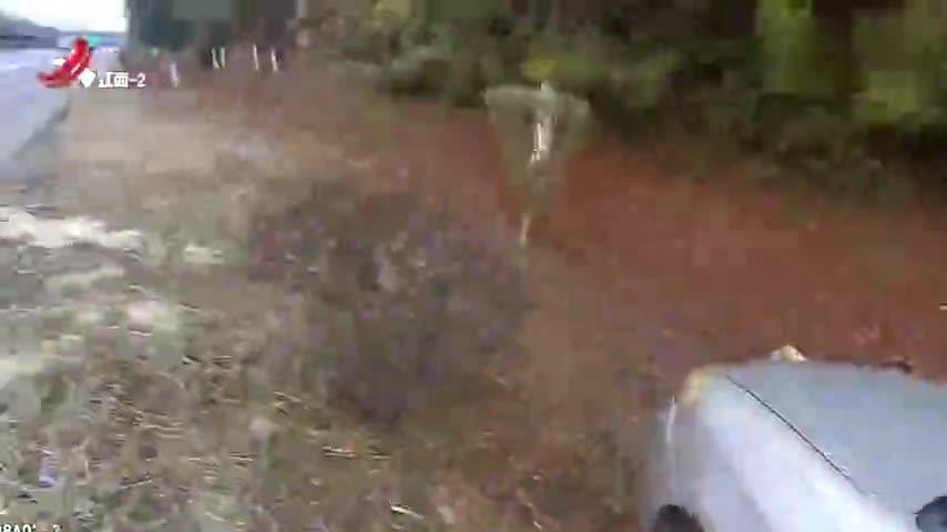 男子高速内急 投机取巧将车停草地上:我没停高速 交警机智回怼