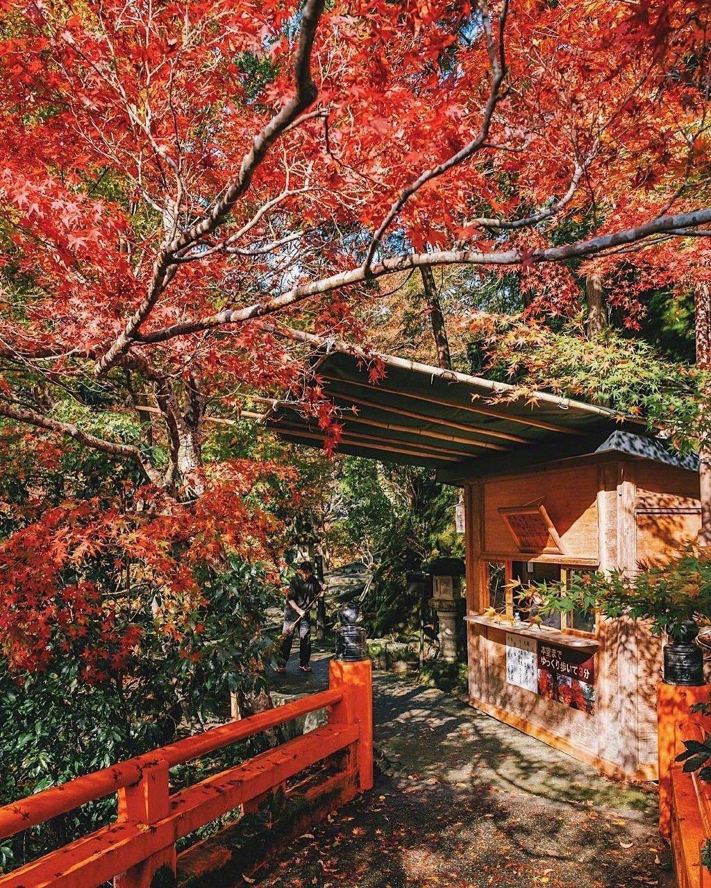 日本京都的红叶
