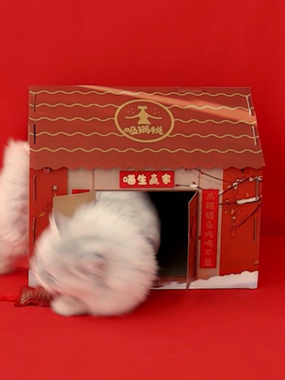 这款猫咪新年大礼包大家放心下单!~ 除了偏远地区
