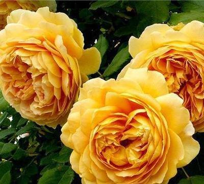 喜欢养花花卉,就养自己感觉喜爱的花卉,漂亮美丽不在花下