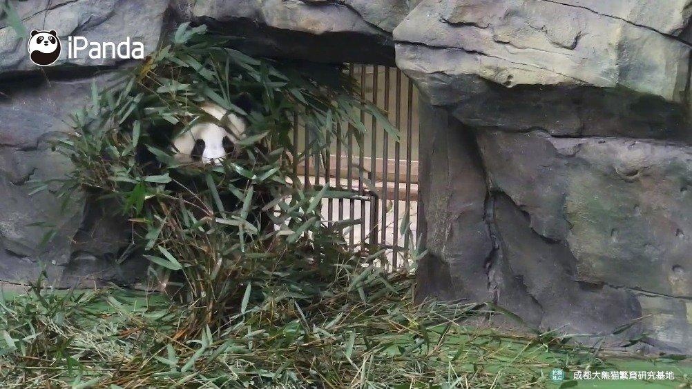 考眼力!你能从逆天的迷彩伪装中找到特种熊吗