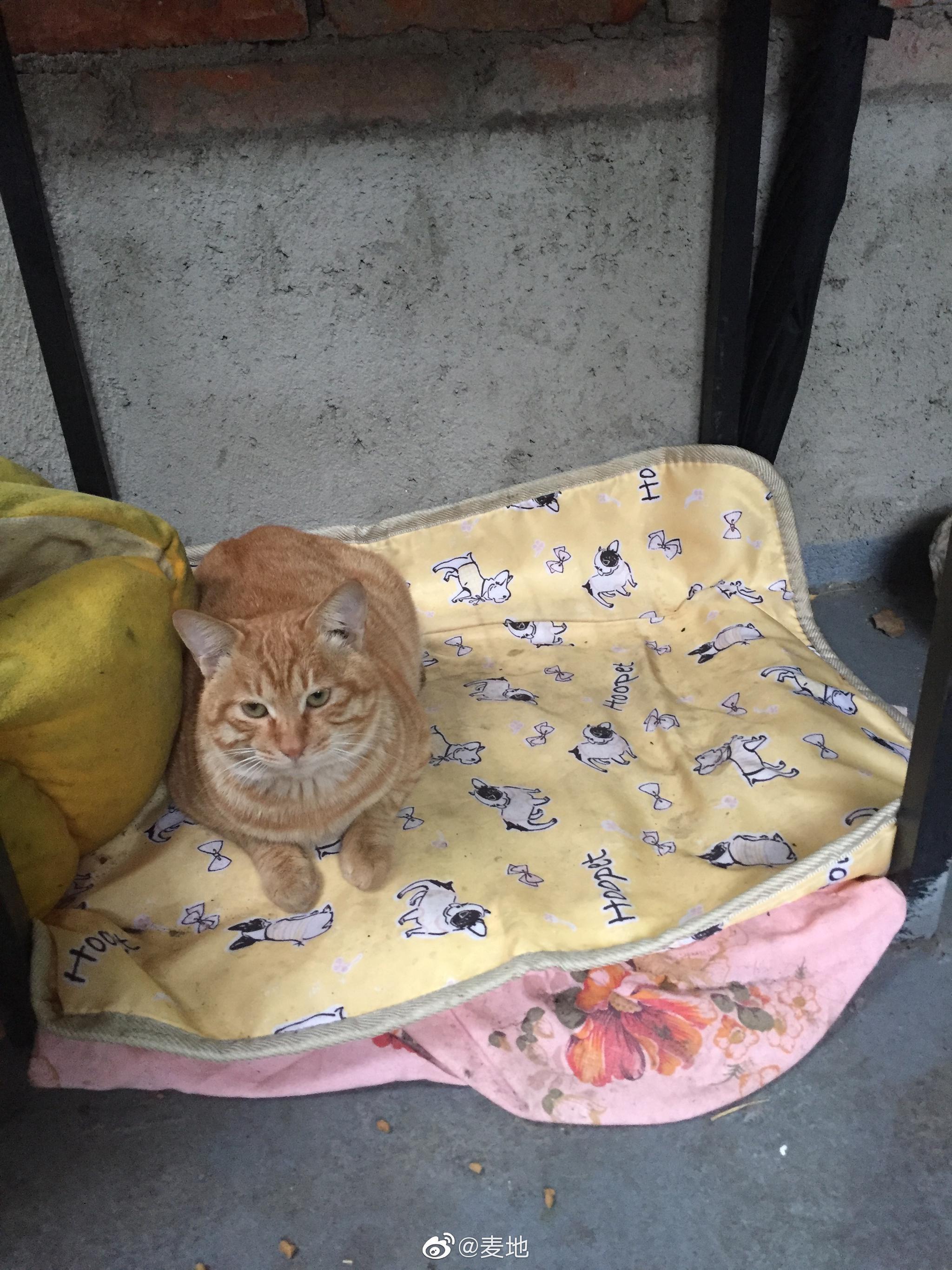 考拉的流浪猫,享受电热毯待遇。