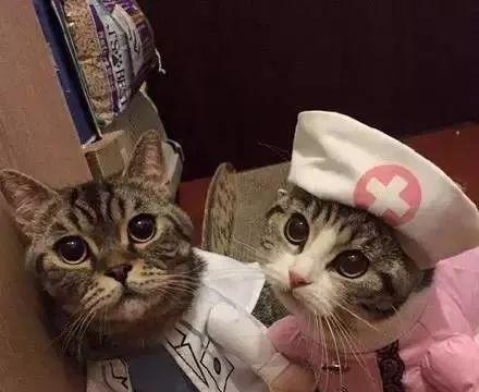 在猫咪生病的时候,你能做的二三事|养护
