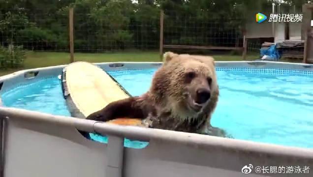 刚刚的跳水可以拿多少分?看到游泳池的大熊迫不及待跳下水游泳!