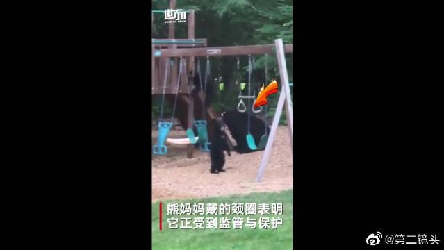 熊宝宝在后院玩吊环秋千还滑滑梯,住户在家里看得津津有味