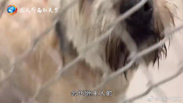 为什么狗狗死后不能将其埋进土里面?科学家道出真实内幕