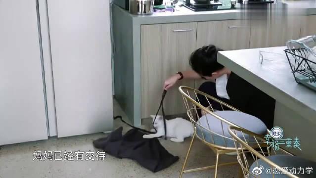 大S和猫告别拍照留念,汪小菲摆pose像中学生!!