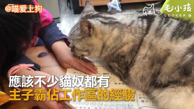 作业写不好可能是家里有只猫@梁老财CC
