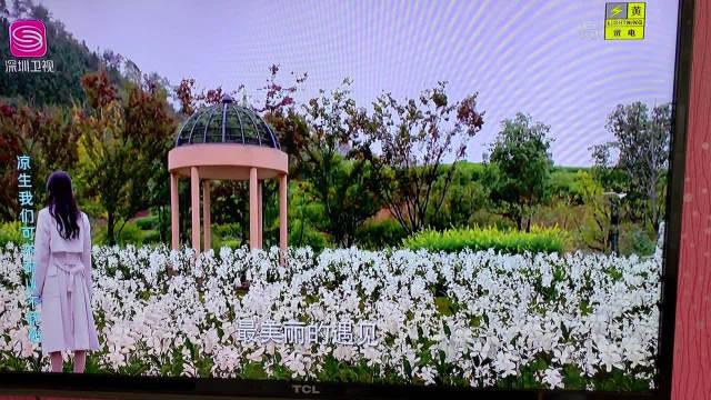 天生苑,姜花园,好美的姜花,程天佑的好超出想象@钟汉良