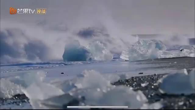 里的北极也太美了,由黄子韬,周冬雨,尹正