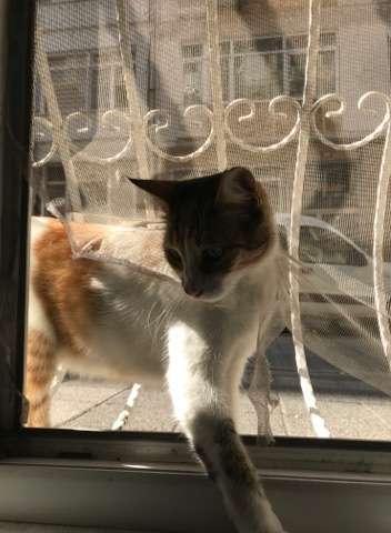 网友这天下班回家,发现附近的流浪猫把他的纱窗破坏