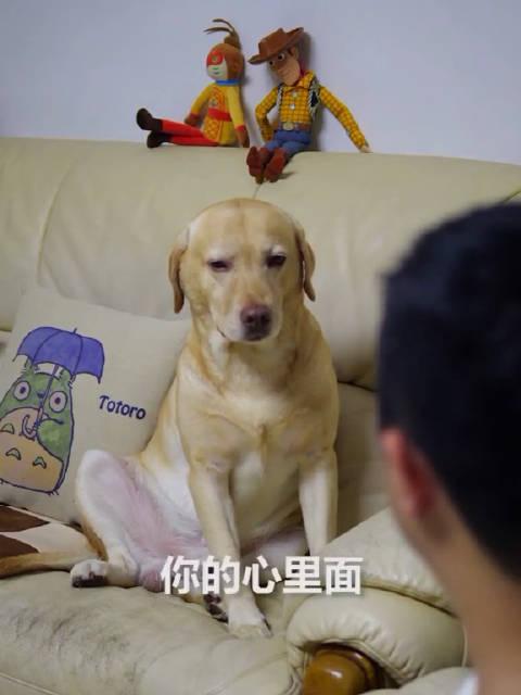 啊终于找到小布撩我的证据了 快看啊 小布竟然是这种狗!