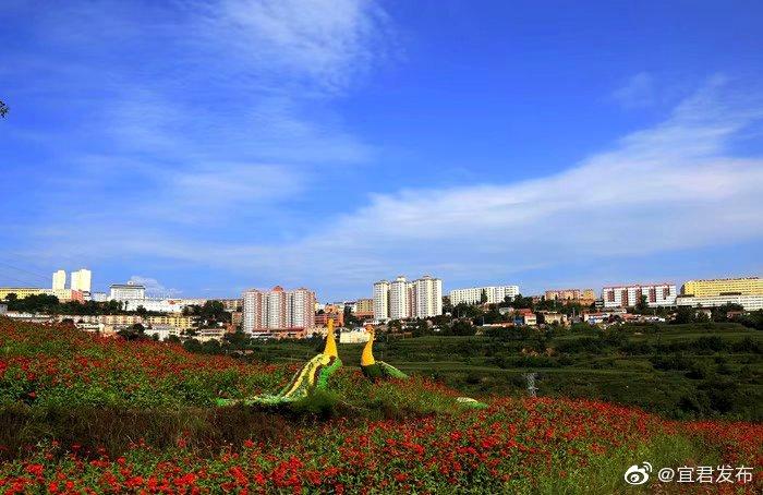 在关中平原与陕北黄土高原的结合部,有一道绿色的屏障