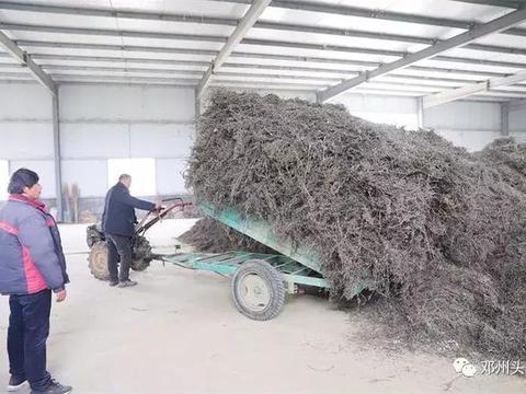 邓州市鸿海药业董事长王海华:扶贫路上巾帼不让须眉