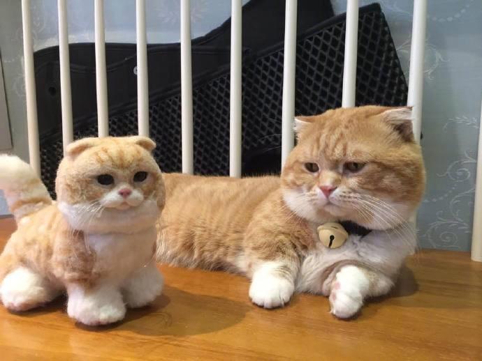 拜猫网_主人给家里的喵买回来了一只猫公仔,相似度99%.