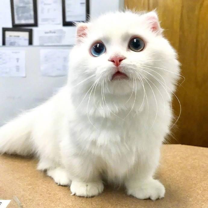 雪白色的软萌小可爱