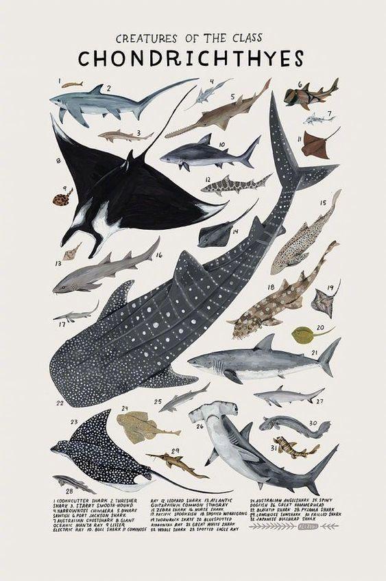 复古启发型生物科学海报 | Kelsey Oseid