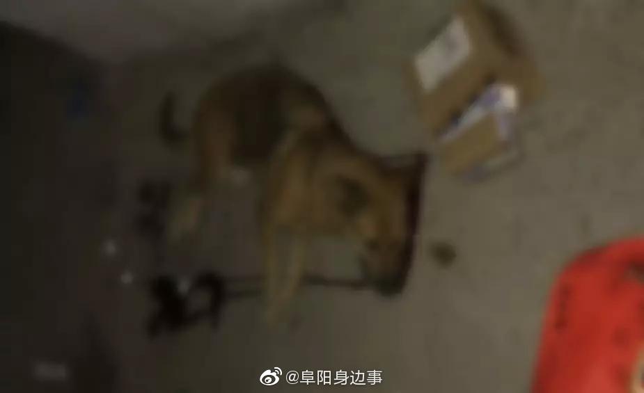 太和:恶狗连伤4人 警方将其当场击毙