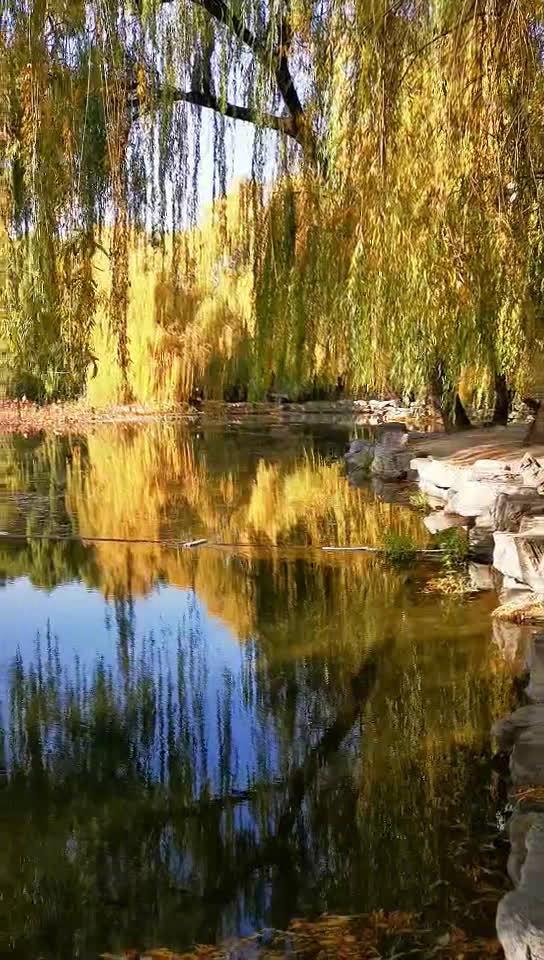 初冬的圆明园略显萧瑟,虽没有昔日的游人如织,但静谧如诗