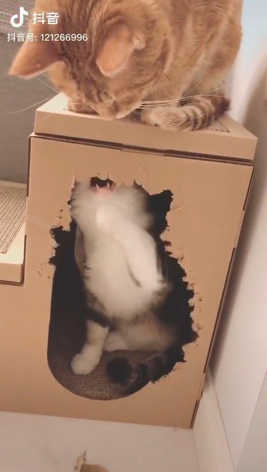 哈哈哈哈,感觉它咬了个自画像!