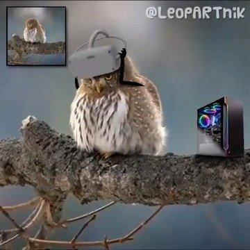 玩 VR 的小鸟(/r/reallifedoodles/ 版,左上角为原图)