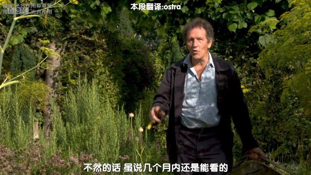 Monty分享延长香草花园观赏期的秘诀~剪剪剪本段翻译:@ostra