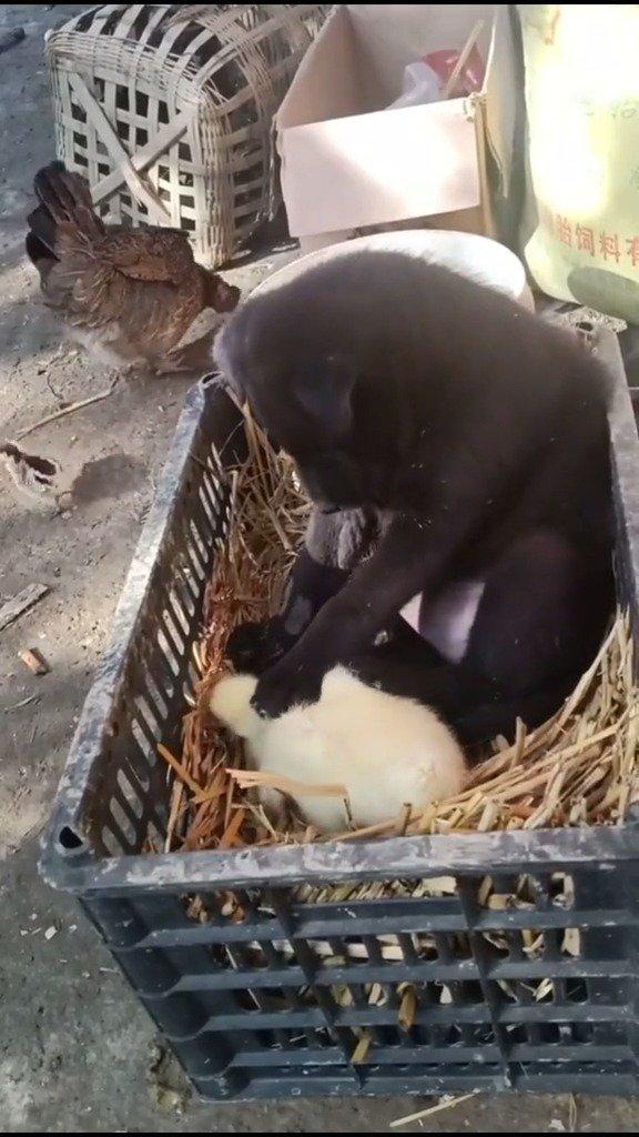 小黑:第一次带孩子, 有点棘手 !