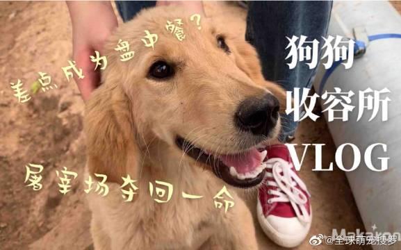屠狗场救回来差点被杀掉的宠物狗。