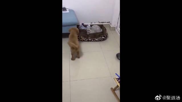 狗狗小心翼翼的靠近,还是免不了被打,主人还在旁边笑的不行!