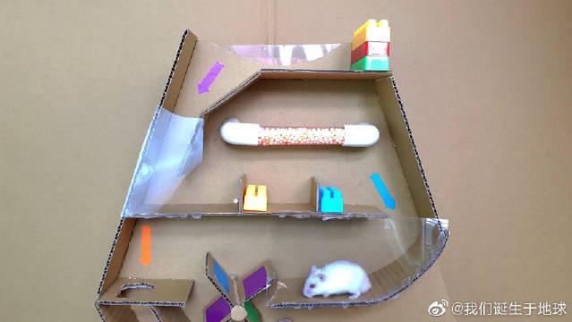 小仓鼠真的是可爱死了,还这么聪明。