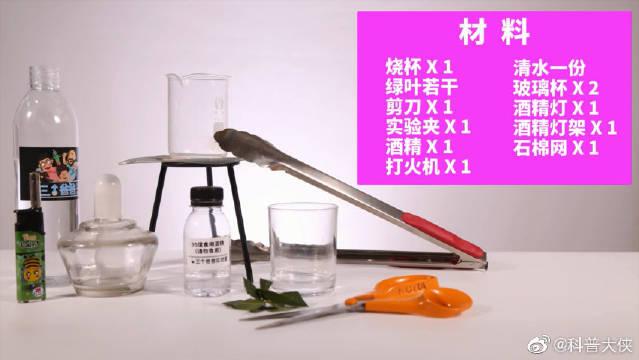 一起认识不能溶于水却能在酒精里溶解的叶绿素!