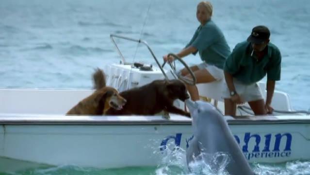 海豚亲吻狗狗后高兴的跳了起来….多么温馨的画面