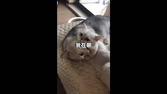 这只小猫咪,是不是像极了被工作压迫的你,幼小可怜无助~