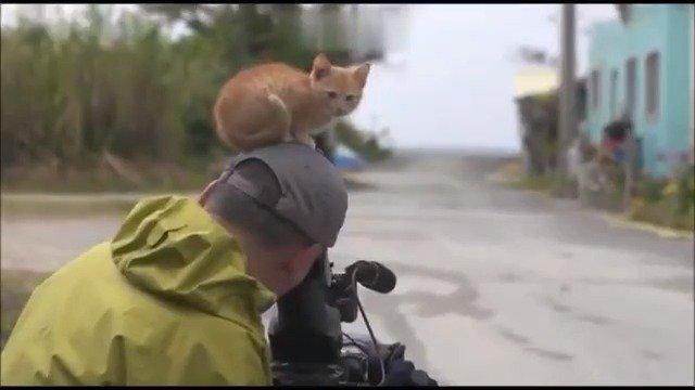 岩合光昭《猫步走世界》里的超有爱片段,每次看到都会被萌到哭泣