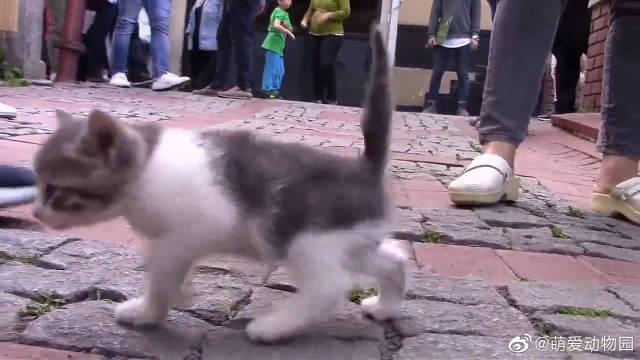 好可爱,谁家的小奶猫满街跑,没人要我可要抱走了