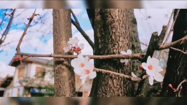 安静的生活,无最爱,无例外,丽江,又见花开。许多时候