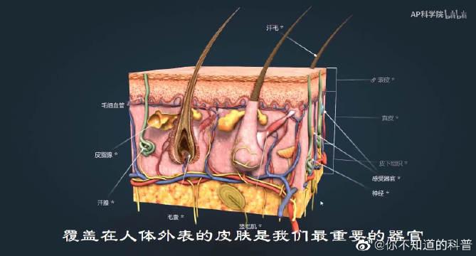 皮肤层下含有各种各样的感受器,它们对来自外界的刺激有着不同反应