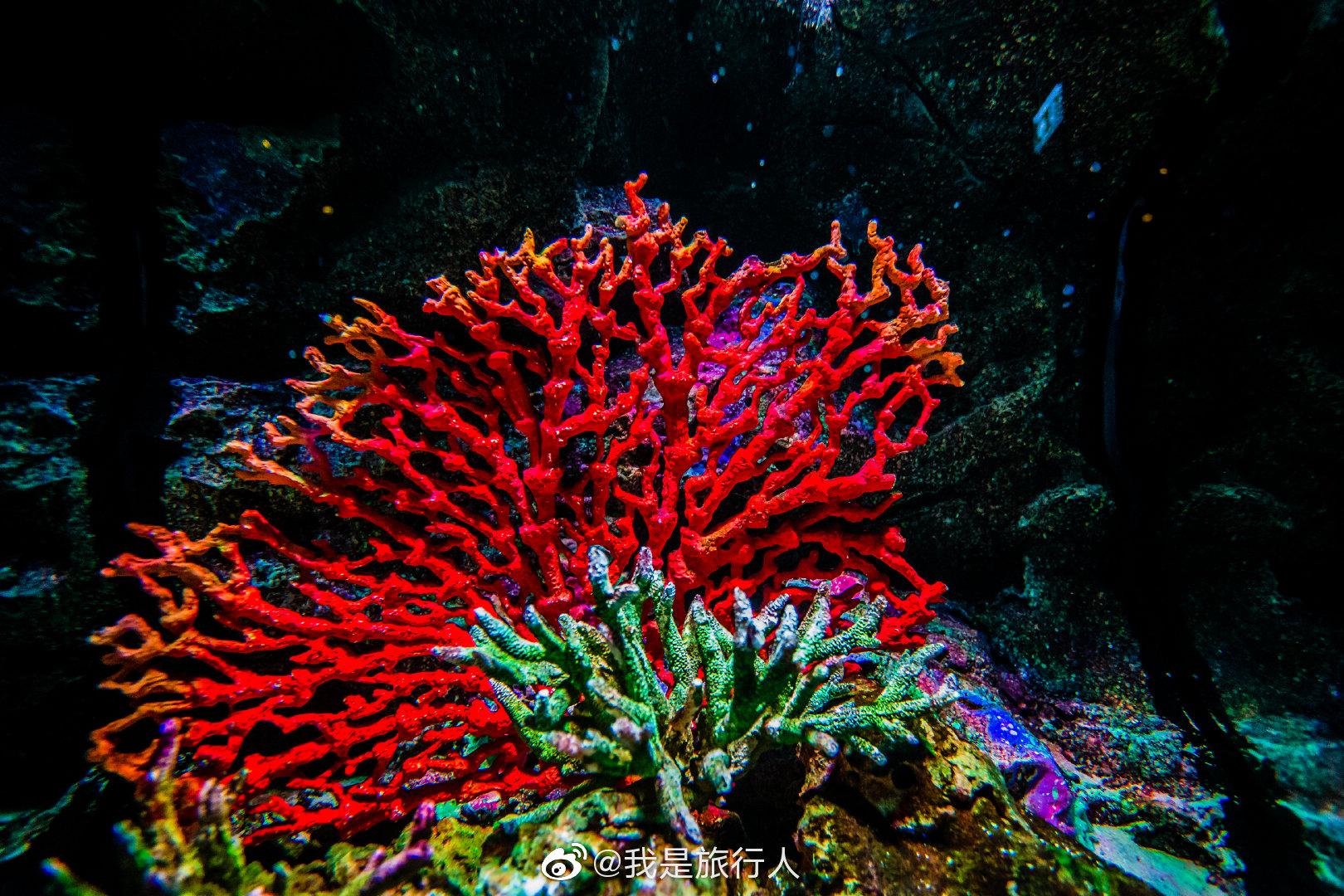 曼谷暹罗海洋世界   东南亚最大水族馆对于总是高温闷热的曼谷来说