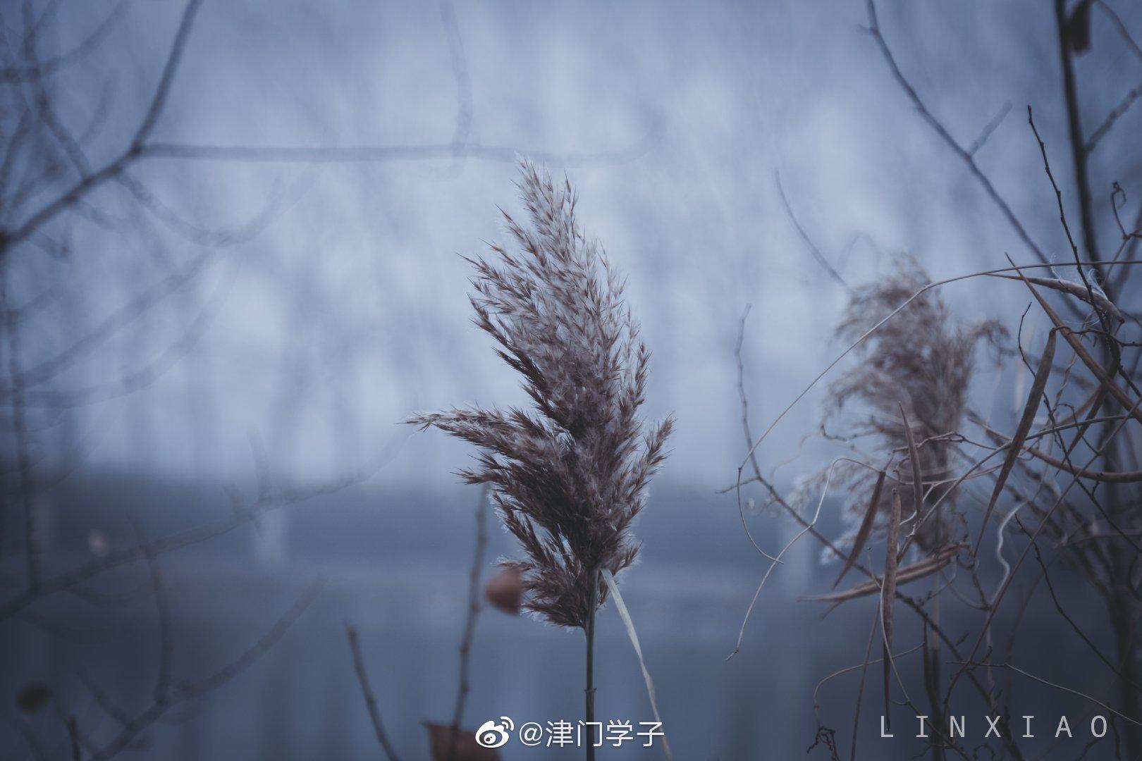 @中国民航大学 趁着大雾拍点航大的冬大家复习月加油