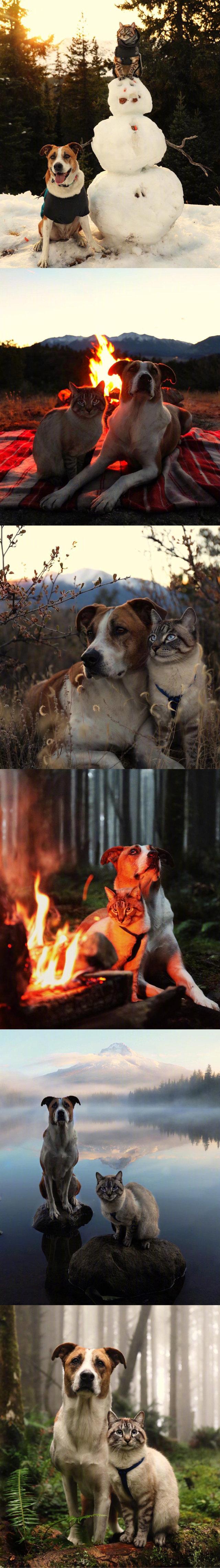 狗狗Henry和猫咪弟弟Baloo寄来的旅行明信片,请签收