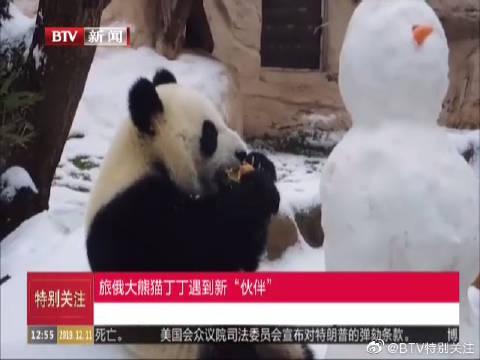 """旅俄大熊猫丁丁遇到新""""伙伴"""""""