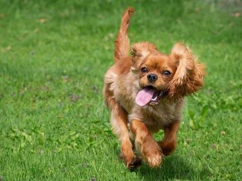 辟谣:狗狗其实也会出汗,虽然散热效果差,但狗狗也有2种汗腺