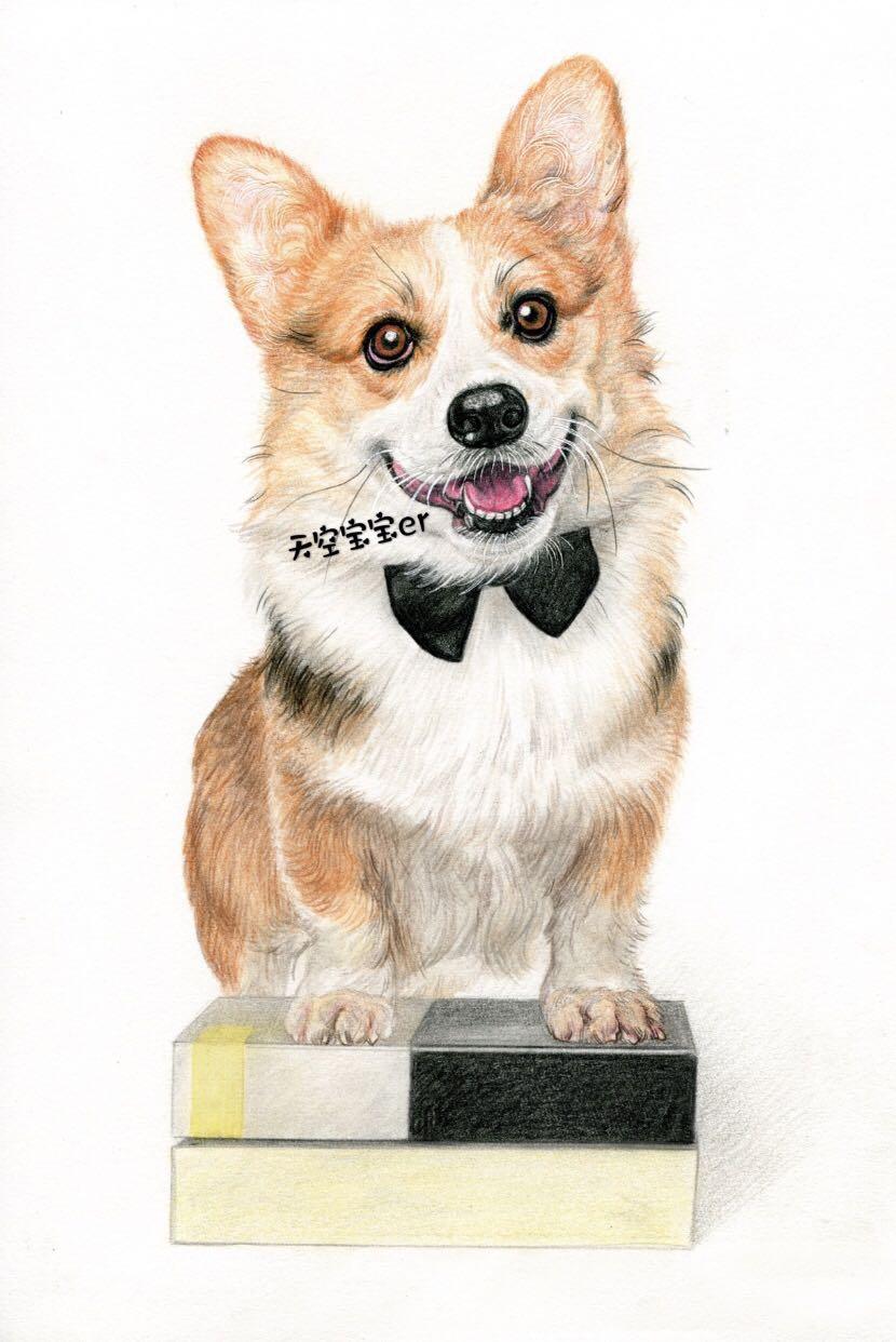 狗子和喵星人彩铅手绘|作者@天空宝宝er
