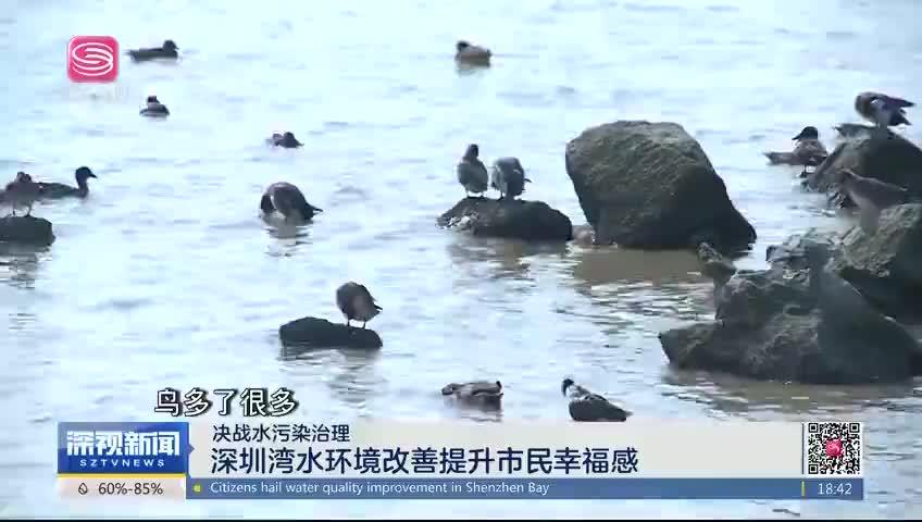 决战水污染治理 深圳湾水环境改善提升市民幸福感