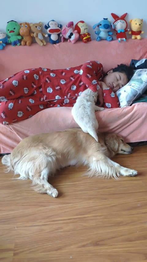 眼看小狗要掉下沙发,狗妈妈急忙用身体去挡住,母爱真伟大!