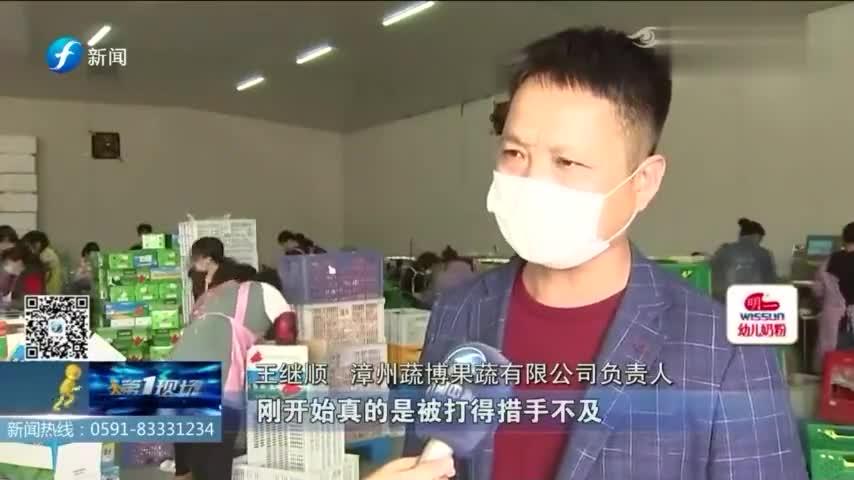 """""""南菜北调""""保供应!漳州本月每日采摘蔬菜超过5000吨"""