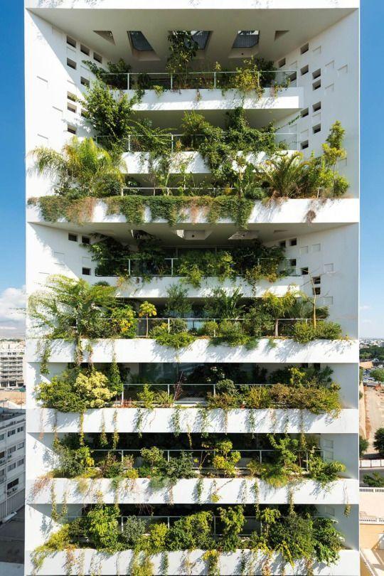建筑设计丨绿化